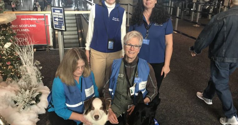 Bright Spot Therapy Dogs at Bradley International Airport
