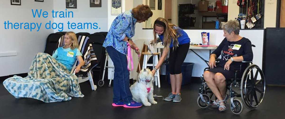 Bright Spot Therapy Dogs
